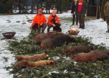 polowanie 27-01-2018 (52)