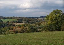 Polowanie-Dobrzechow-Bazant-Czudec (24)